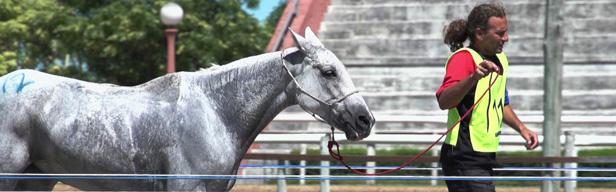 FEI Equestrian World - FEI Equestrian World - April 2016