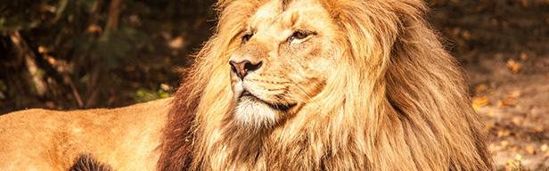 Wild Ones - Wer ist König? - Gefährlich an Land