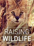 Raising Wildlife: Aufzucht in der Wildnis