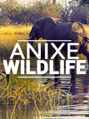 Anixe Wildlife