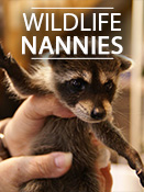 Wildlife Nannies